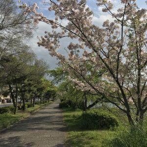 momo's Aroma room 京都のリンパマッサージ & アロマ-春はイメチェン